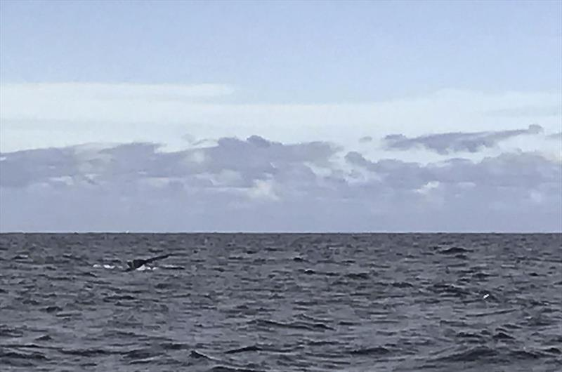 Apologies for the resolution - taken with my phone in the middle of a boat test. - photo © John Curnow