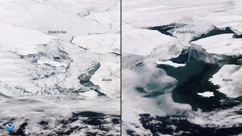 Satellite images showing an adverse change in sea ice coverage in the Bering Sea on April 1, 2014 (left) and March 31, 2019 (right). photo copyright NOAA taken at