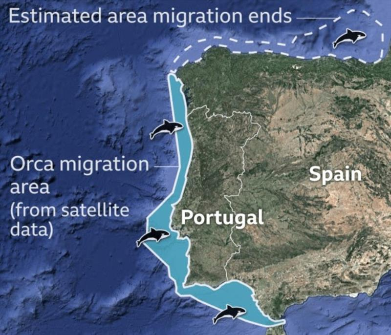 Orca whales migration area off the coast of Portugal and NW Spain - photo © Noonsite